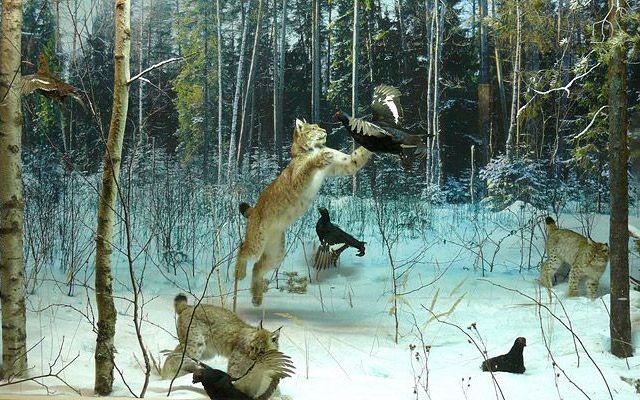 Картинки кострома природа