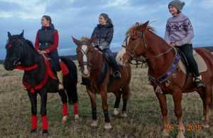 Лошади, Прогулки, Кострома, Роял Хос