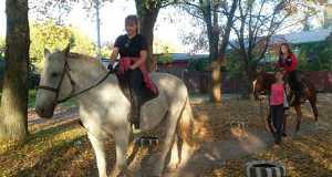 Лошади, Прогулки, Кострома, Фаворит