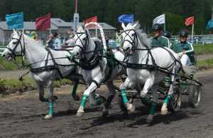 Лошади, Прогулки, Кострома, Ипподром