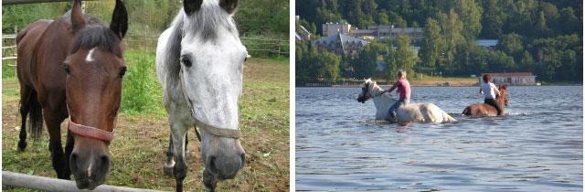Природно-оздоровительный комплекс Алмаз-Холдинг, конный клуб алмаз холдинг, алмаз холдинг кострома, конная база алмаз-холдинг   лошади кострома, катание на лошадях кострома, лошади, лошади видео, катание на лошадях, катание на лошадях цена, обучение катанию на лошадях, конные туры, катание верхом на лошади, контур кострома, конная база