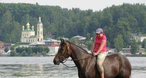 Лошади, Прогулки, Кострома, Контур