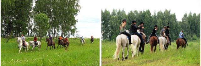 лошади кострома, катание на лошадях кострома, лошади, лошади видео, катание на лошадях, катание на лошадях цена, обучение катанию на лошадях, конные туры, катание верхом на лошади, контур кострома