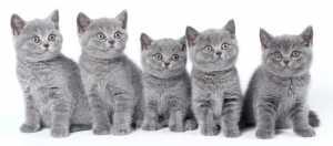 Музей природы, музей природы Костромской области, выставка котят, выставка щенков, продажа котят, продажа щенков