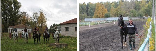 конный завод, сайты конных заводов, конный завод медведки, конный племенной завод,