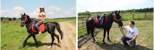 Конный клуб Royal Horse, конная база,   лошади кострома, катание на лошадях кострома, лошади, лошади видео, катание на лошадях, катание на лошадях цена, обучение катанию на лошадях, конные туры, катание верхом на лошади, контур кострома, конная база