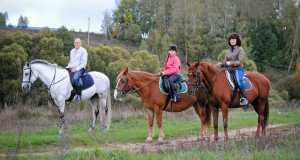 Лошади, Романов лес
