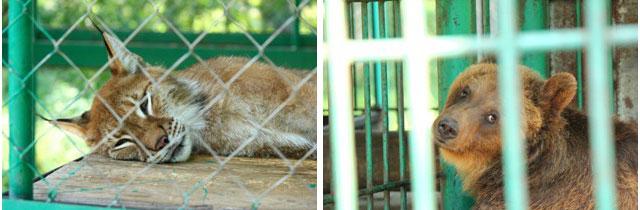 зоопарк в костроме, кострома зоопарк режим работы, кострома зоопарк, режим работы зоопарк, Костромской зоопарк