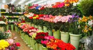Цветы, Магазины, Цветы