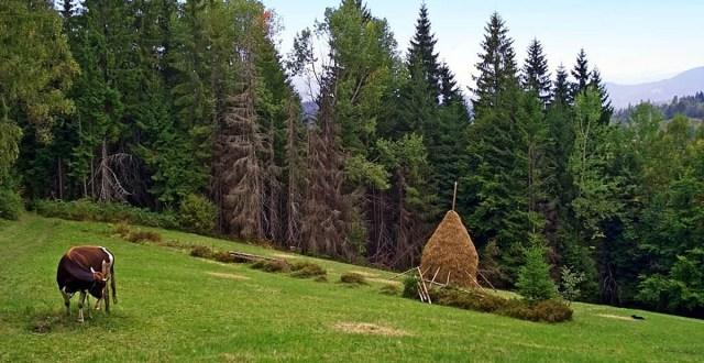 агротуризм, Европа, Германия, сельская обстановка
