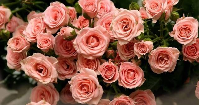 Цветы купить в костроме