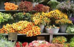 кострома цветы, доставка цветов кострома, цветочные магазины в костроме