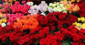 кострома цветы, доставка цветов кострома, цветочные магазины в костроме, магазин цветов Дикая орхидея