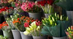 кострома цветы, доставка цветов кострома, цветочные магазины в костроме, магазин цветов Лантана Кострома
