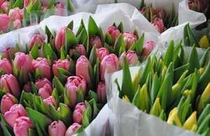 сеть магазинов цветов, цветы сеть магазинов, Магазин цветы Кострома, Цветочные магазины в Костроме, Доставка цветов в Костроме, цветочный магазин Мир цветов Кострома
