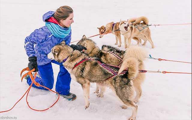 Экспедиция на собачьих упряжка Тропой Ивана Сусанина 2015