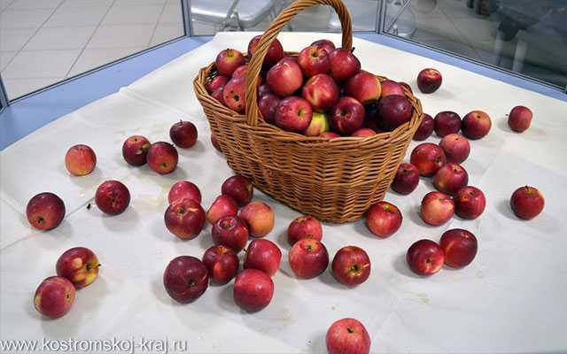 Фестиваль Щедрое яблоко Кострома