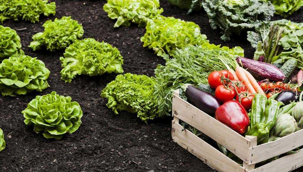 Садоводство, Советы, Огород