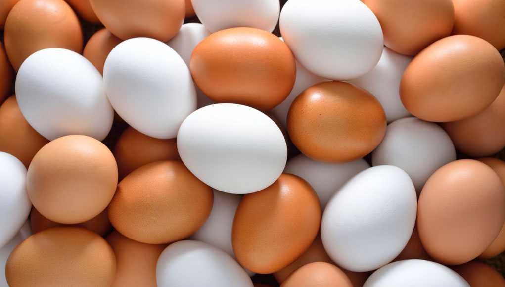 Советы, Яйца