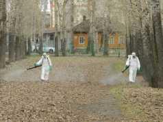 Новости, Кострома, Клещи
