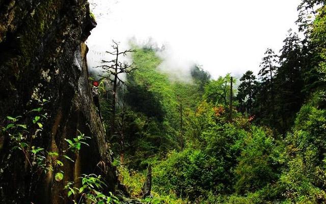 loschina-chernogo-bambuka-misticheskie-mesta