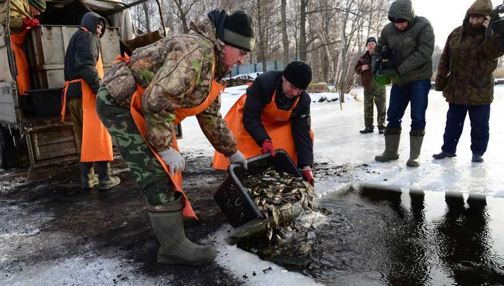 Рыба, Кострома, Новости