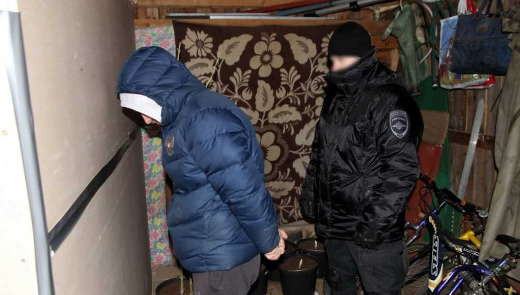 Кострома, Новости, Конопля
