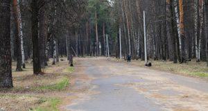 Кострома, Новости, Парк