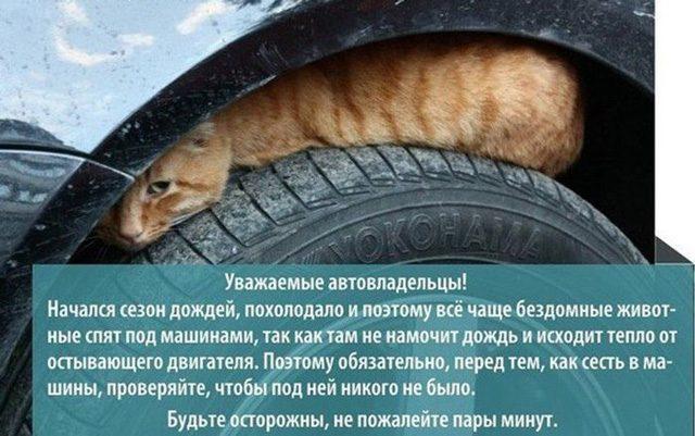 Кострома, Кошки, Новости