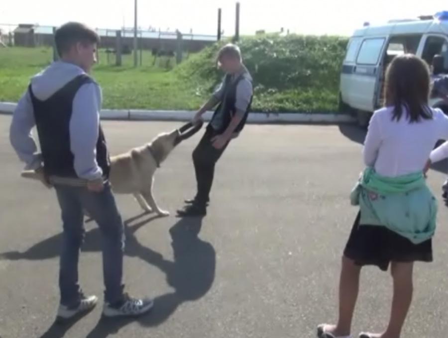 Кострома, Новости, Собаки