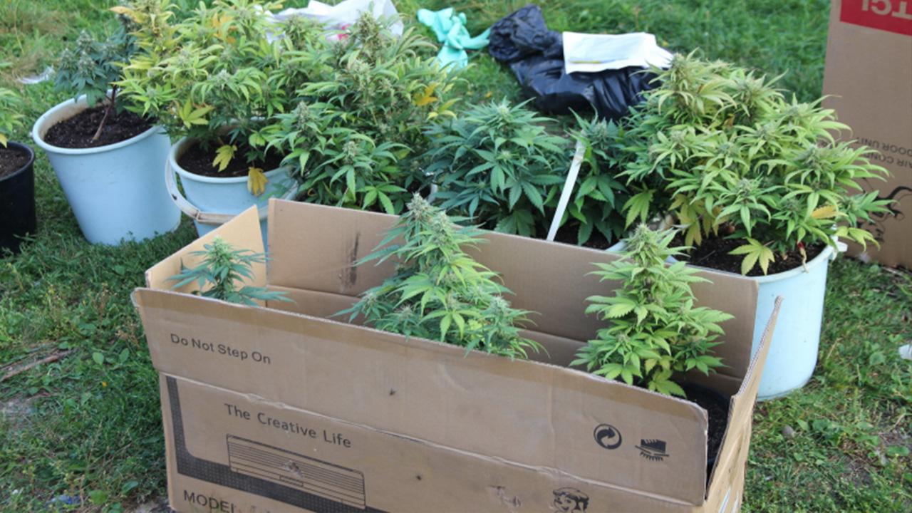 Ящик выращивания конопли марихуана и ноотропил
